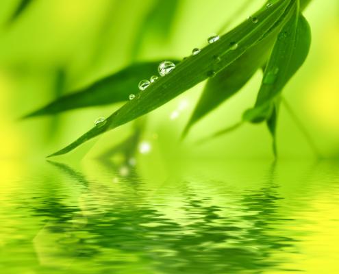 Bambusblatt mit Wassertropfen